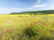 Spring morning in meadow of flowers. Royalty Free Stock Photography