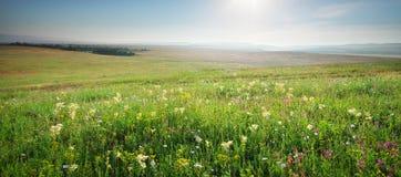 Spring morning Stock Image