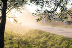 Spring morning misty landscape of tree blossom and dew on green Stock Photo