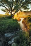 Spring morning. a picturesque river Stock Photo