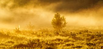 Spring morning by the picturesque river, golden rays in the fog Stock Photos