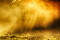 Spring morning by the picturesque river, golden rays in the fog Royalty Free Stock Images