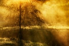 Spring morning by the picturesque river, golden rays in the fog Stock Image
