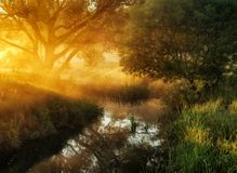 Spring morning by the picturesque river, golden rays in the fog Royalty Free Stock Photos