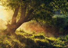 Spring morning by the picturesque river, golden rays in the fog Royalty Free Stock Photography