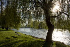 Spring morning by river Krka, Slovenia Stock Photography