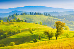 Spring morning valley Royalty Free Stock Images