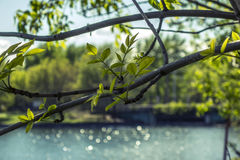 Spring in Moscow, Russia Royalty Free Stock Photography