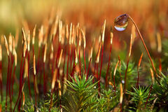 Spring moss Royalty Free Stock Image