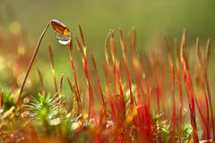 Spring moss Stock Images