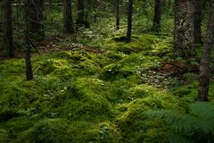 Spring Moss Forest stock photo