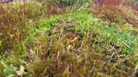 Spring moss. Moss and other small plants in spring Royalty Free Stock Photos