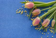 Pink tulips with yellow drops on blue glitter background with copy space stock photography