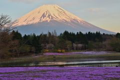 Spring in Mount Fuji Valley in Japan Stock Photos