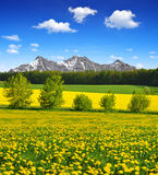 Spring mountain landscape with dandelions Stock Image