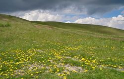 Flowers in meadow. Spring mountain landscape royalty free stock photo