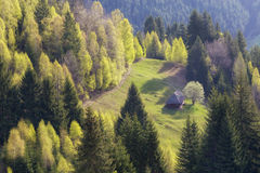 Spring mountain landscape Stock Image