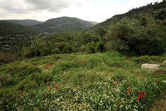 Spring mountain landscape, Israel Royalty Free Stock Photo
