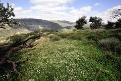 Spring mountain landscape, Israel Stock Photo