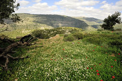 Spring mountain landscape, Israel Stock Image