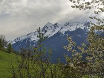 Spring mountain landscape with snow covered alpen mountain peaks and blooming apple tree branches, green meadow in. Stubaital Stubai Valley near Innsbruck royalty free stock photo
