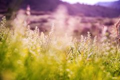 Free Spring Mountain Meadow Stock Images - 40876304