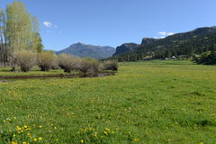 Spring Mountain Meadow Stock Images
