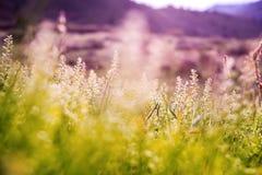 Spring Mountain Meadow. Vegetation Closeup Photo stock images