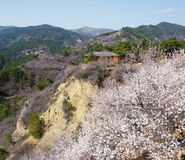 Spring in mountain Stock Image