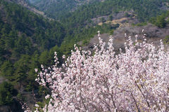 Spring in mountain Royalty Free Stock Image