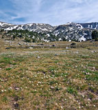 Spring in mountain valley. Meadow covered with white glacier crowfoot flowers in high Madriu-Perafita-Claror Valley in Andorran Pyrenees. Small lake and still Royalty Free Stock Image