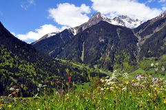 Spring_in_the_mountains. Spring in the Austrian mountains Stock Images