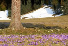 Spring in mountains royalty free stock photography