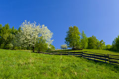 Spring in the mountains Royalty Free Stock Images