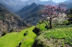 Spring in the mountains. Colorful mountain terraces in springtime Royalty Free Stock Images