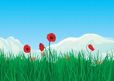 Spring at mountains. Red spring poppies and green grass on background with mountains Stock Image