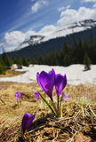 Spring in mountains Royalty Free Stock Photo