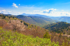 Spring in the mountains Royalty Free Stock Photo