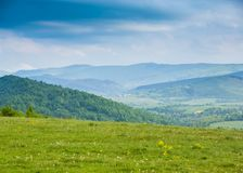 Spring in mountains. Field of spring  flowers and blue ountains Royalty Free Stock Images