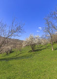 Spring in the mountains near the village of Lahij Azerbaijan Royalty Free Stock Image
