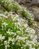 Spring in mountains Stock Images