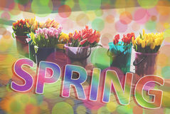 Spring multicolour background Stock Images