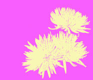 Spring Mums. Abstract Chrysanthemums in spring colors of yellow and lavender Royalty Free Stock Images
