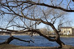 Spring naked branches of trees over the lake. Russia. Suburb of St. Petersburg Stock Images