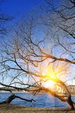 Spring naked branches of trees over the lake. Russia. Suburb of St. Petersburg Stock Photo