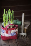 Spring narcissus bulbs in patchwork bag with garden tool and twig on wooden table Royalty Free Stock Images