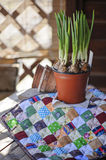 Spring narcissus and ceramic pots on fabric quilt on wooden table Royalty Free Stock Photo