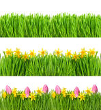 Spring narcissus tulip flowers. Green grass water drops Royalty Free Stock Photos