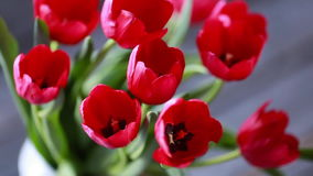 Spring narcissus and tulips stock video