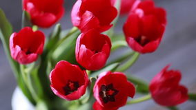 Spring narcissus and tulips stock video footage
